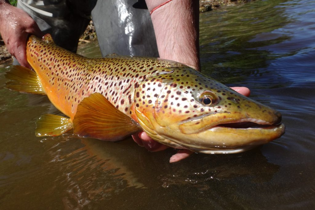 Trout fishing Tips and Advice