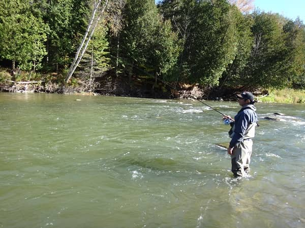 Steelhead baits for dirty water