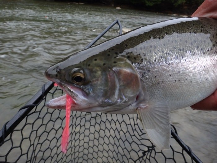 Fishing With Worms – 10 Guide Tips For More Trout And Steelhead