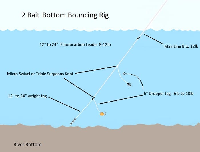2 Bait Bottom Bouncing Rig