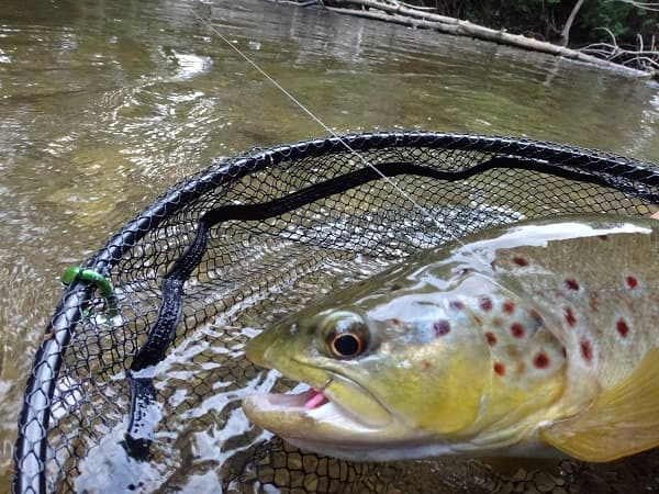 Rubber Coated Trout net