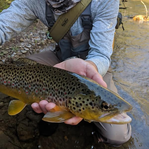 Catch More Fish With A 2 Fly Setup