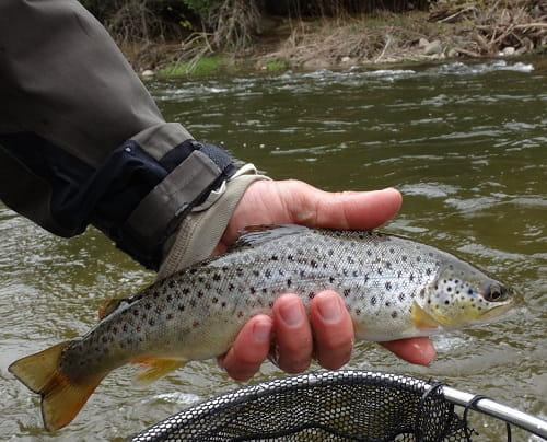 Small Trout Require small river fishing rods