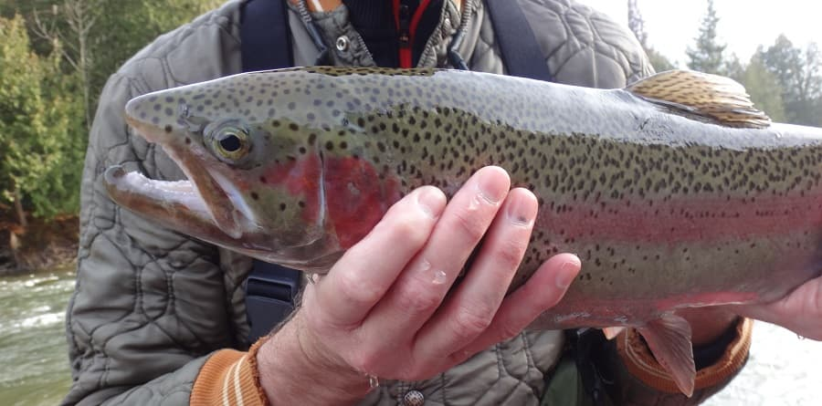 Trout fishing in the rain can be great for rainbow trout