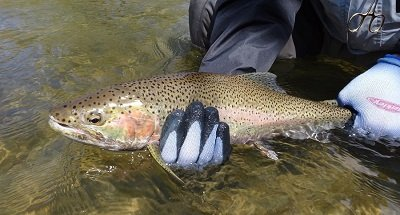 11 Best Trout Lures For Spring – What The River Guides Use