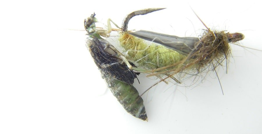 Caddis Pupa and Caddis Larva are great spring Trout flies