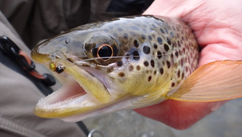 Small baits for trout like this one