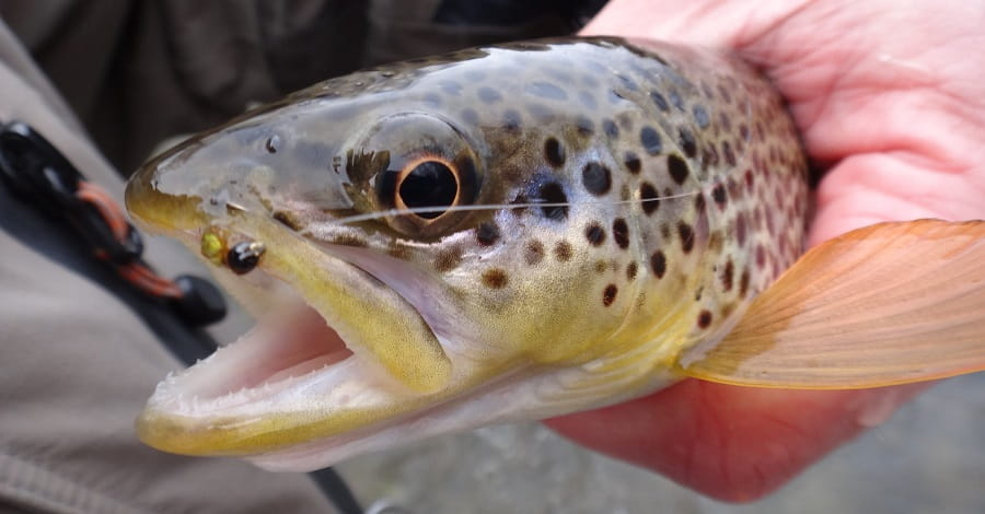 Spring Trout flies