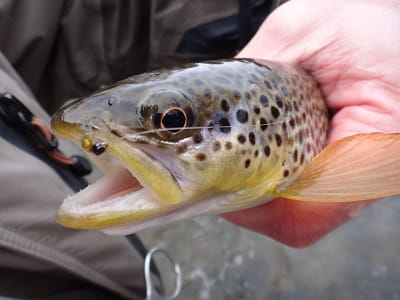 11 Spring Trout Flies That Guides Actually Use