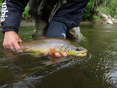 Spring Trout Fishing – Tips From A Pro Guide