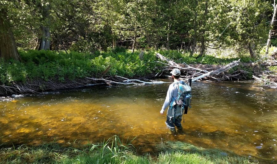 How to catch trout in a stream - an angler fishing a nice trout stream