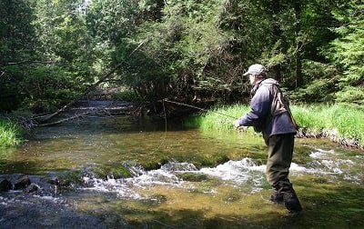 How To Catch Trout In A Stream: 19 Best Guide Tips