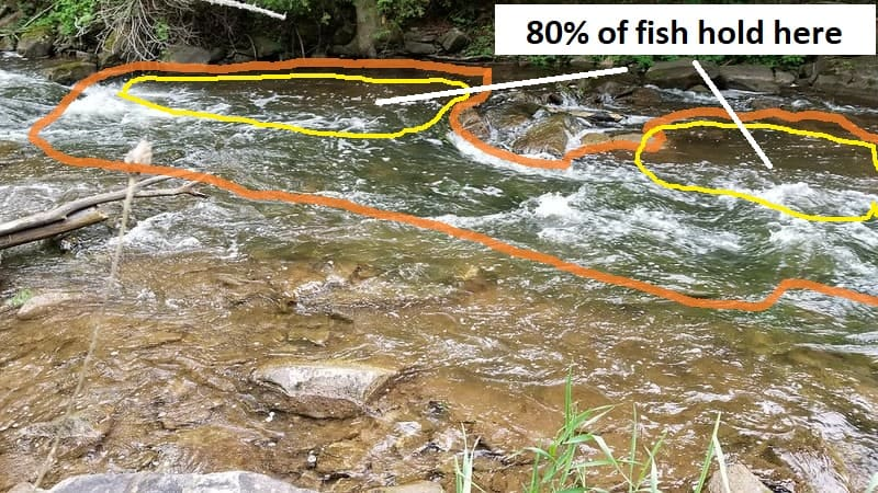 80% of the fish hold in 20% of the water